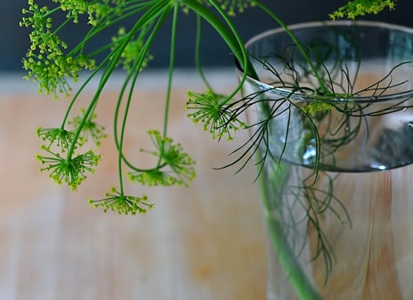 How to store dill in the refrigerator for a long time