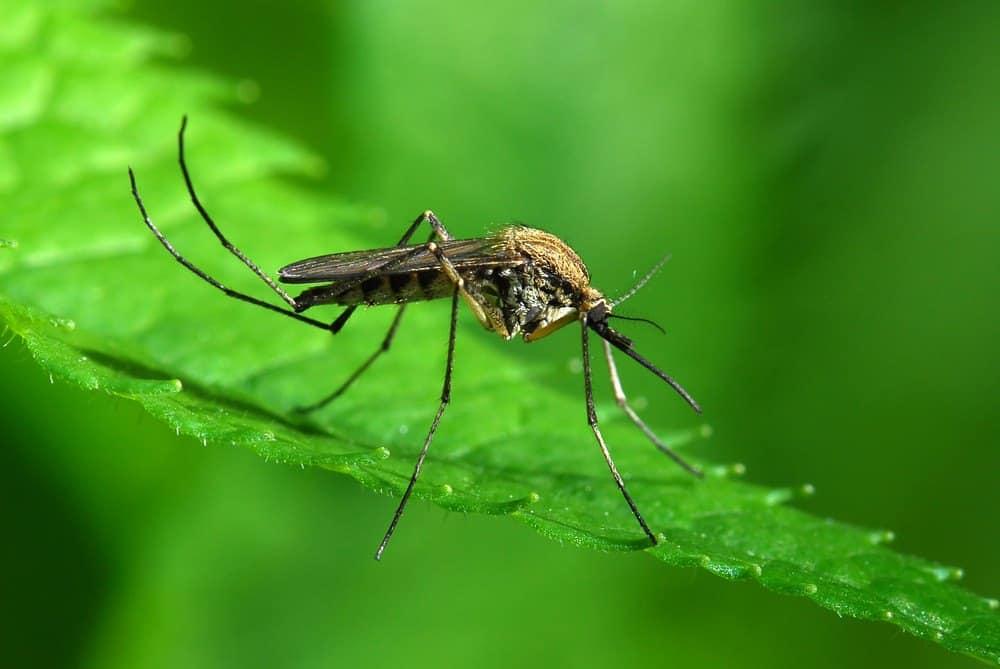Народные средства от комаров в квартире