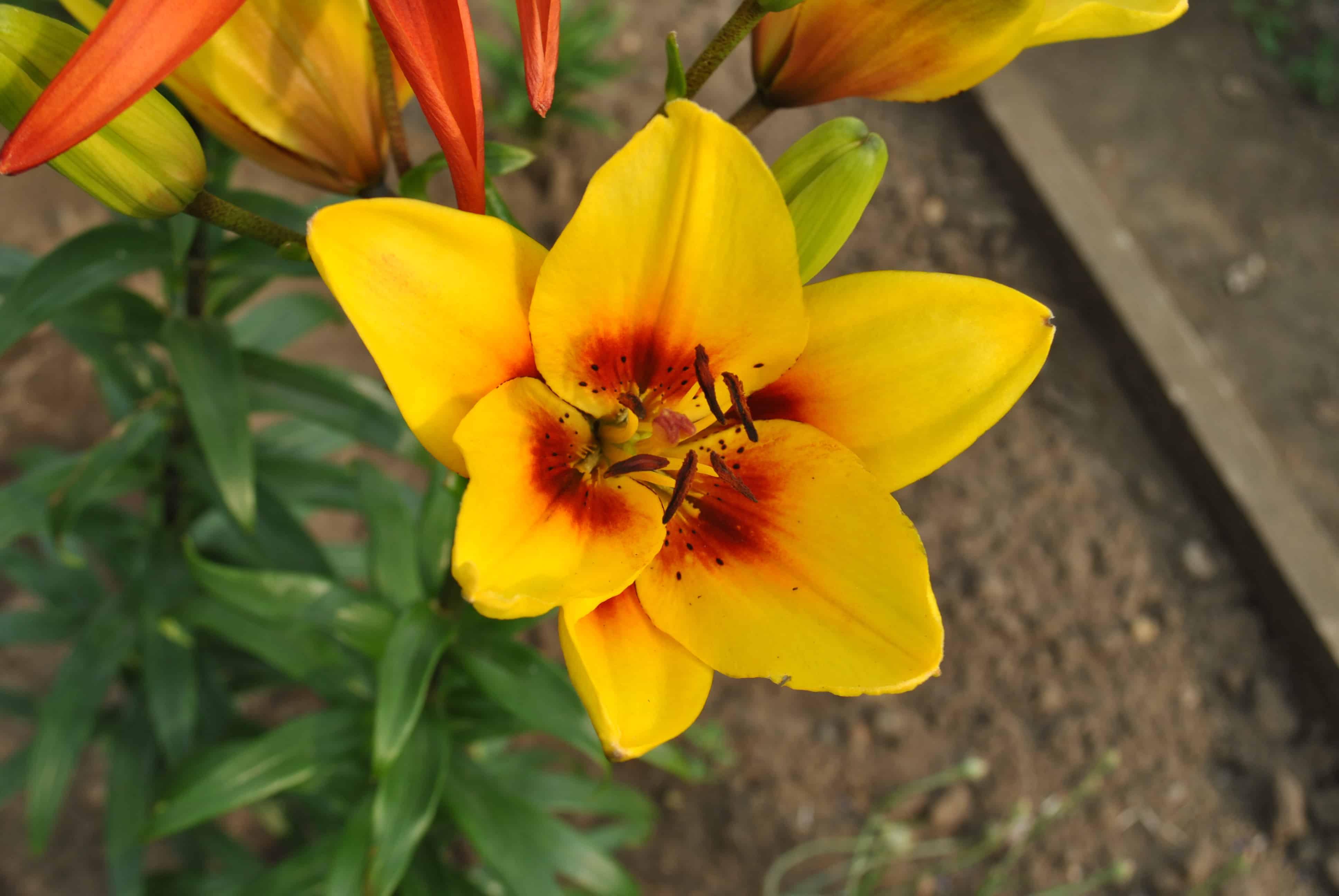 Чем отстирать пятна от цветов